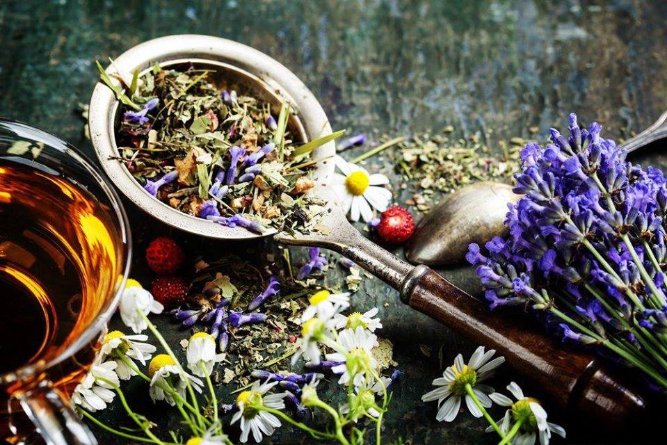 Atelier plantes des Sorcières et Magiciens à 11420 Belpech